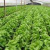 仕事を辞めて農業で起業や定年退職後 田舎で野菜作りをしたい人