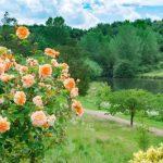 公園、観光地、遊園地などの自然に囲まれた仕事は気分良く働ける